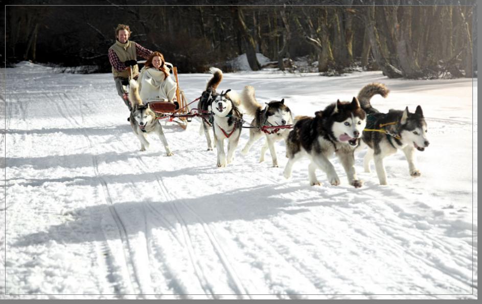 Venta de cachorros Husky Siberiano - perros de raza Husky